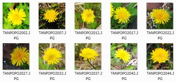 TANPOPO_TEST