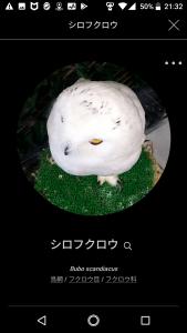 BIRD02-1