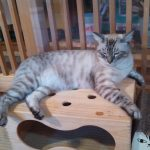 cat01