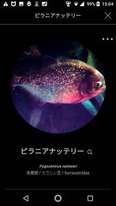 FISH01-1