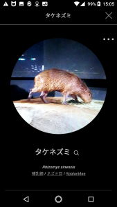 FISH04-1