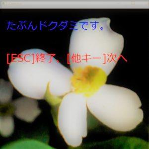 camera_dokudami01-1