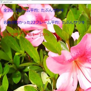 movie_satsuki01-1